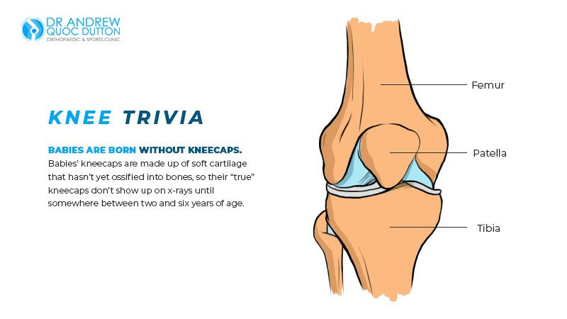 Dr Andrew Dutton Knee Trivia Illustration