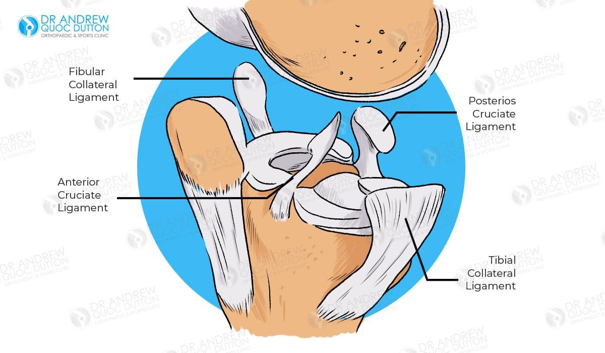 Dr Andrew Dutton Ligament Reconstruction Illustration
