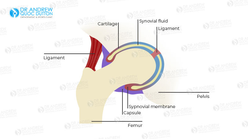 Dr Andrew Dutton Hip Joints Illustration
