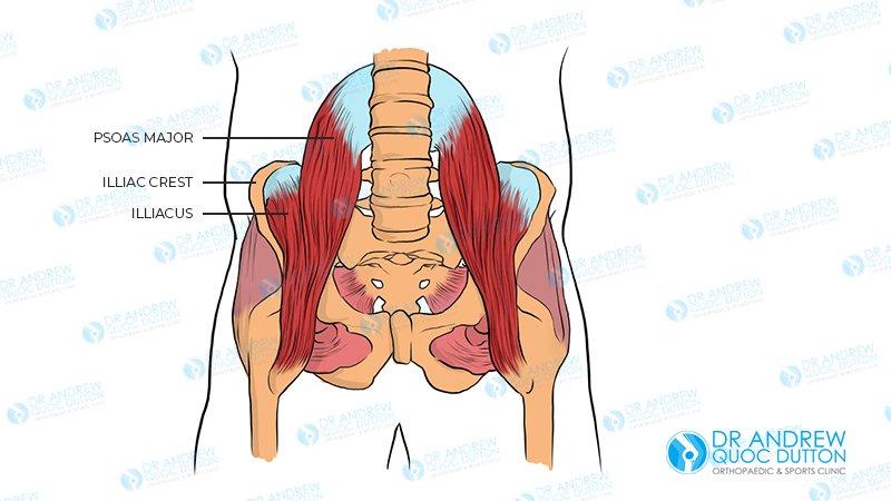 dr andrew dutton hip flexor illustration